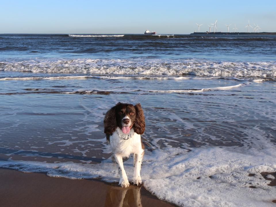 Dog at the sea