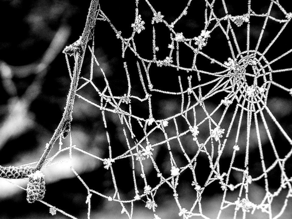 Branch with cobweb