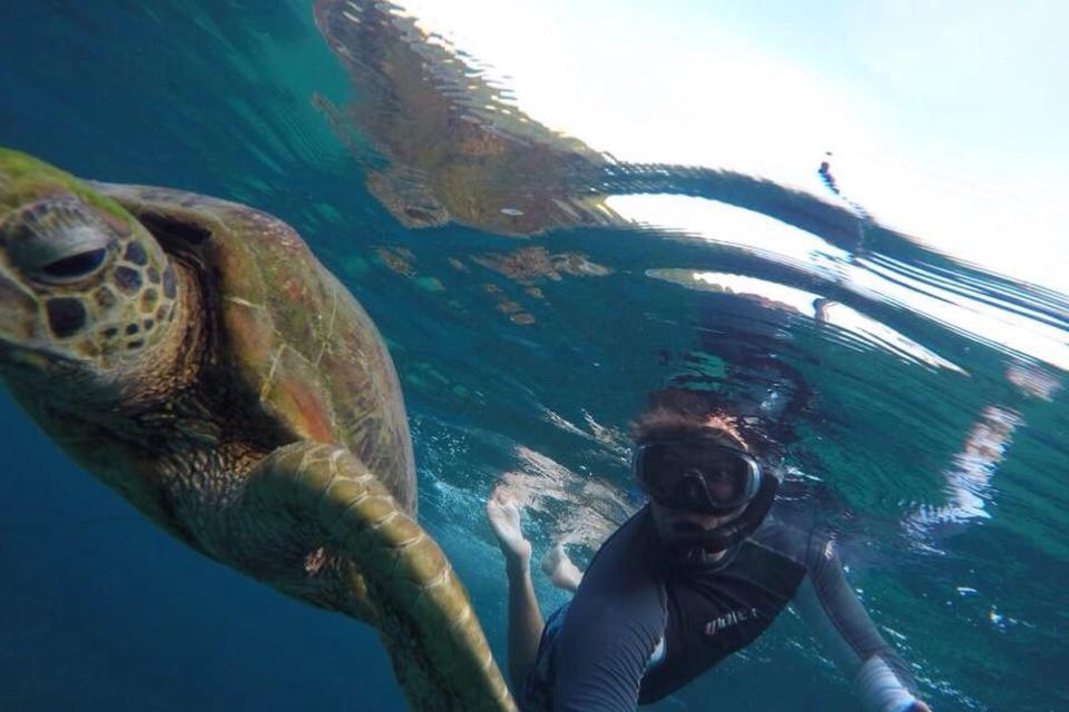 Turtle and snorkeling man
