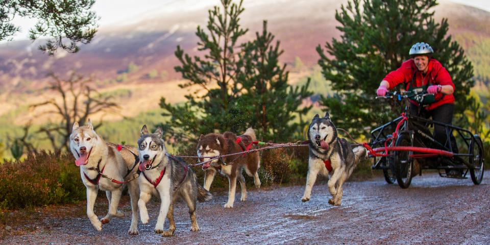 Four huskies pulling a woman