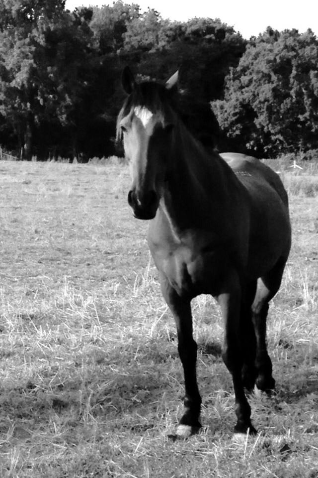 Horse standing on a pasture