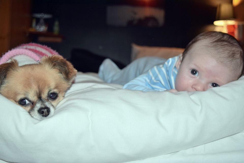 Baby and dog lying next to each other
