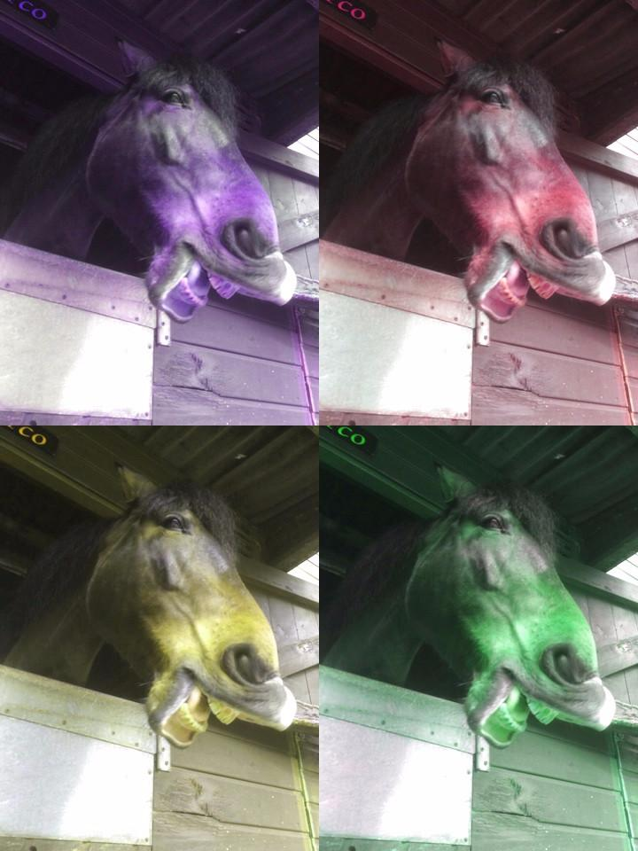 Picture of a horse in popart style