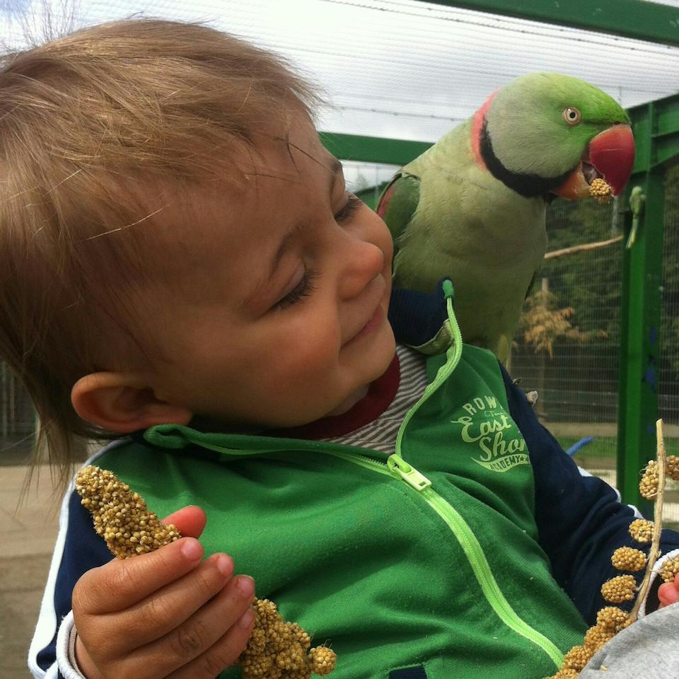 Little boy with a Parakeet on his shoulder