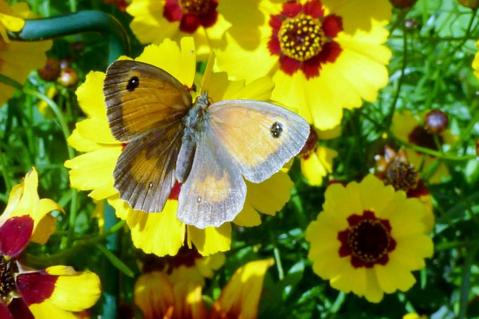 picture , Beautiful, butterfly, garden, canvas