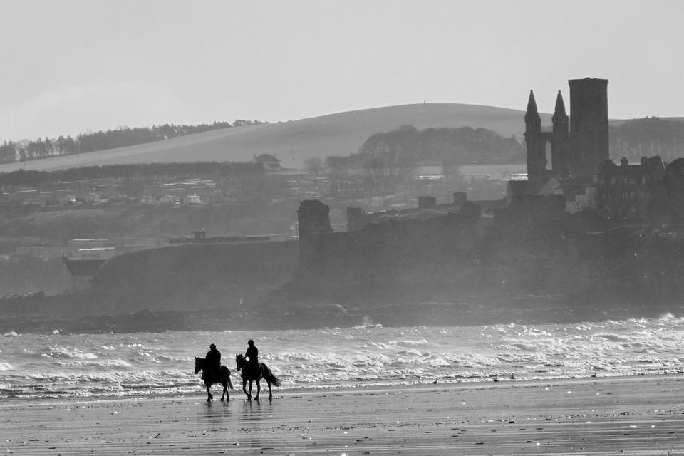 beach, horses, beautiful