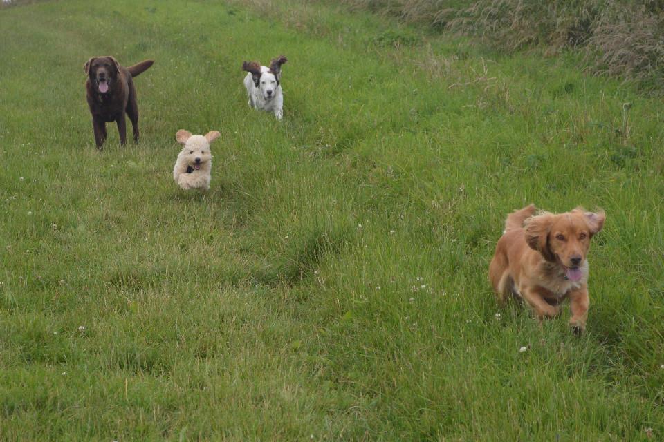 animals, dogs, running