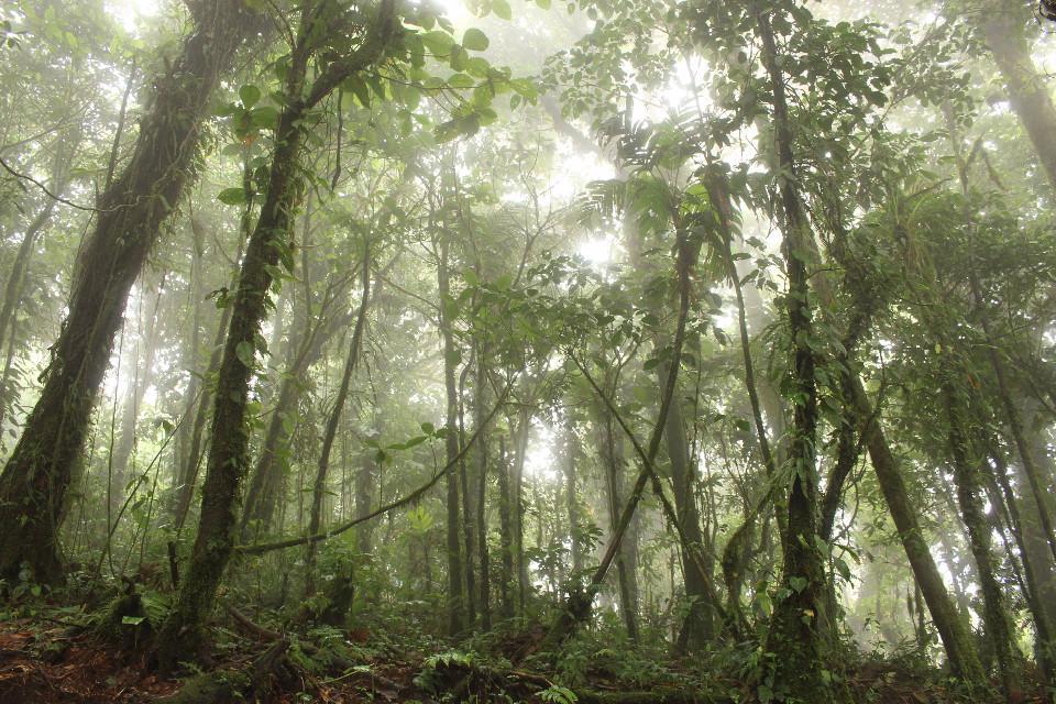 Costa Rica, tropical, jungle, rainforest, honeymoon