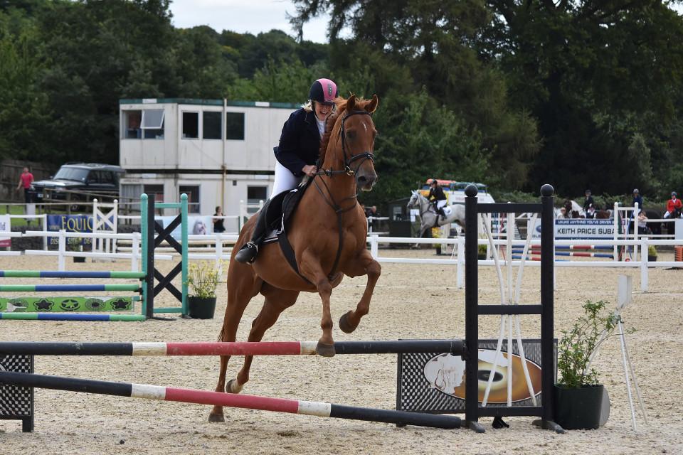 animals, horses, race horse