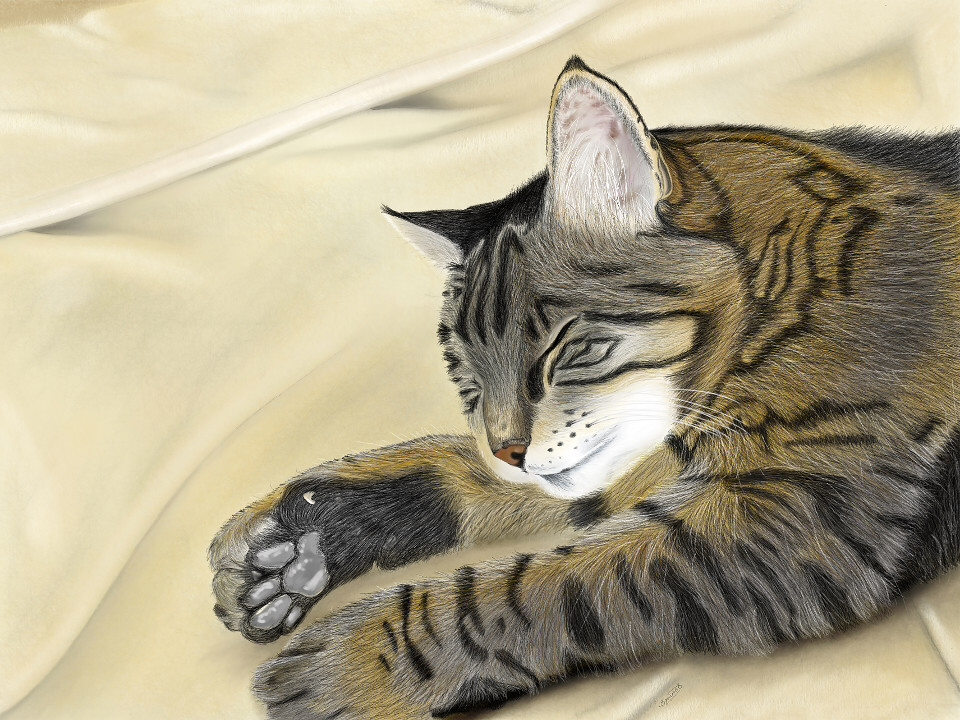 animals, cats, cat drawing