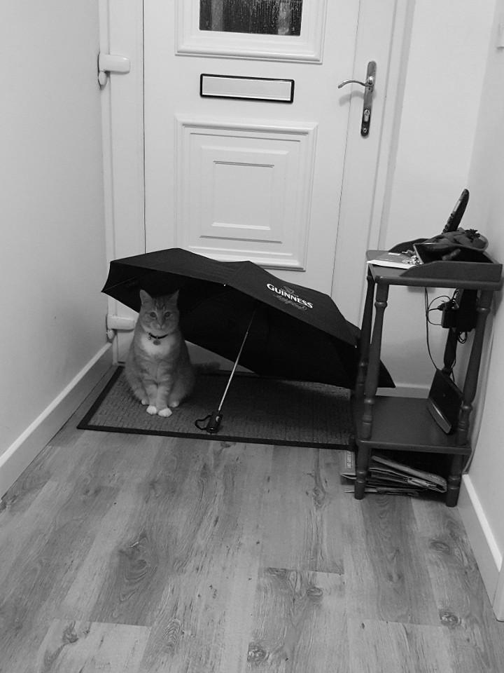 animals, cats, cats acting funny, umbrella, cat logic