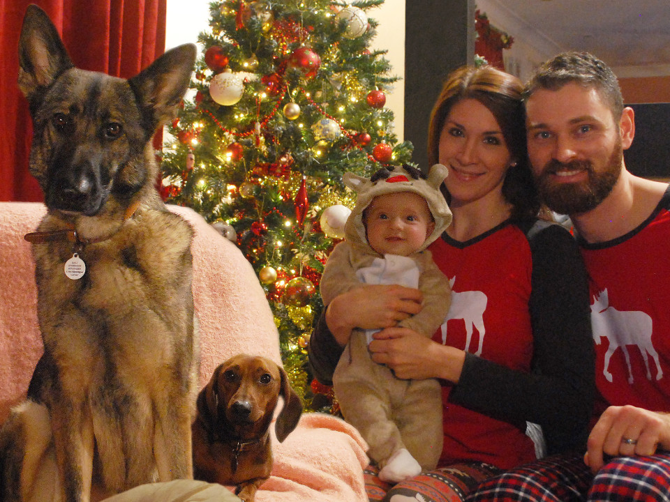Family, Christmas, Christmas photo, animals, dogs, funny animals