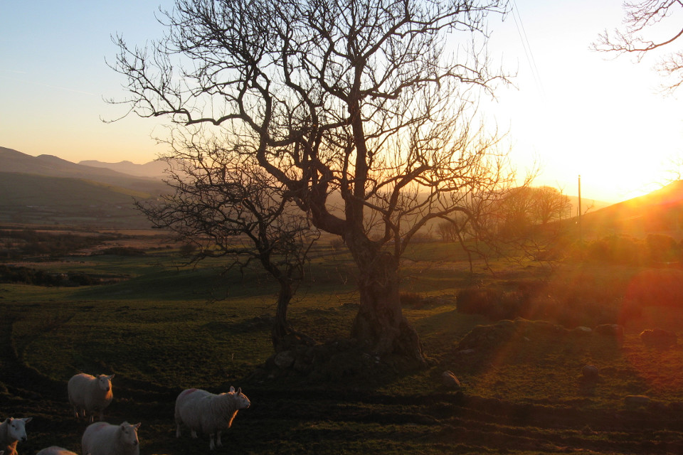 Morning, sunset, mountains, sheep, frosty, beautiful