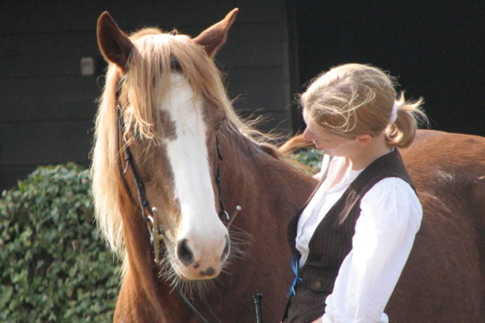 human, horse, jockey, special bond