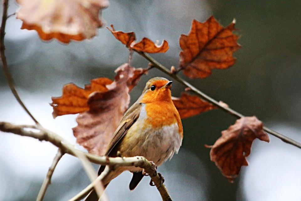 Autumn, photography, beautiful, bird, foliage