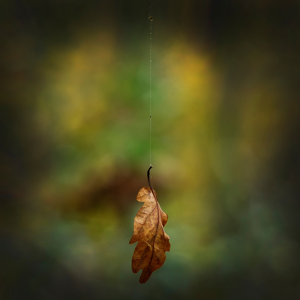 silk, leaf, autumn, art photography