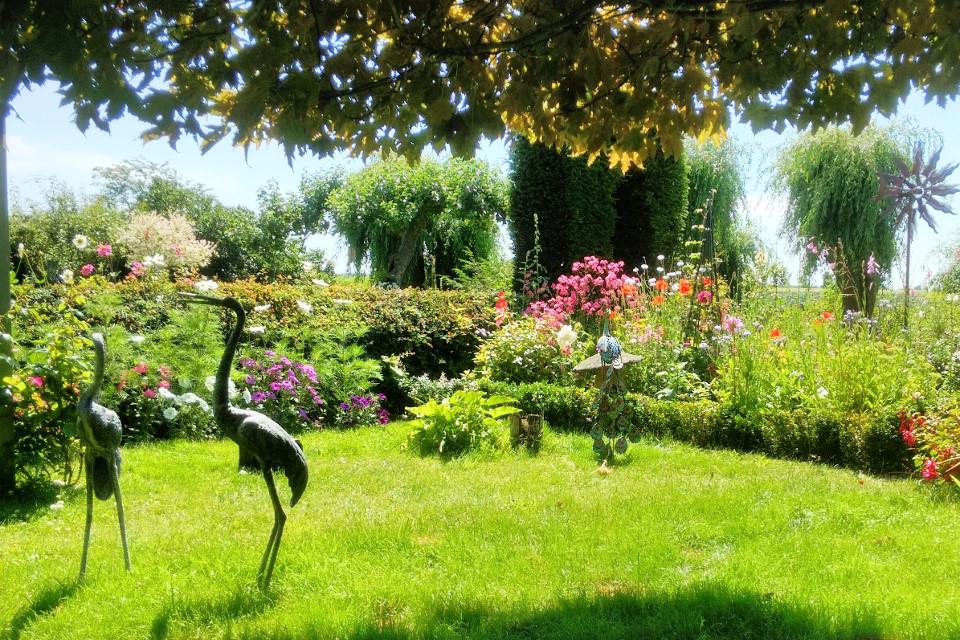 Garden, flamingos, sunny garden, garden of Eden, plants