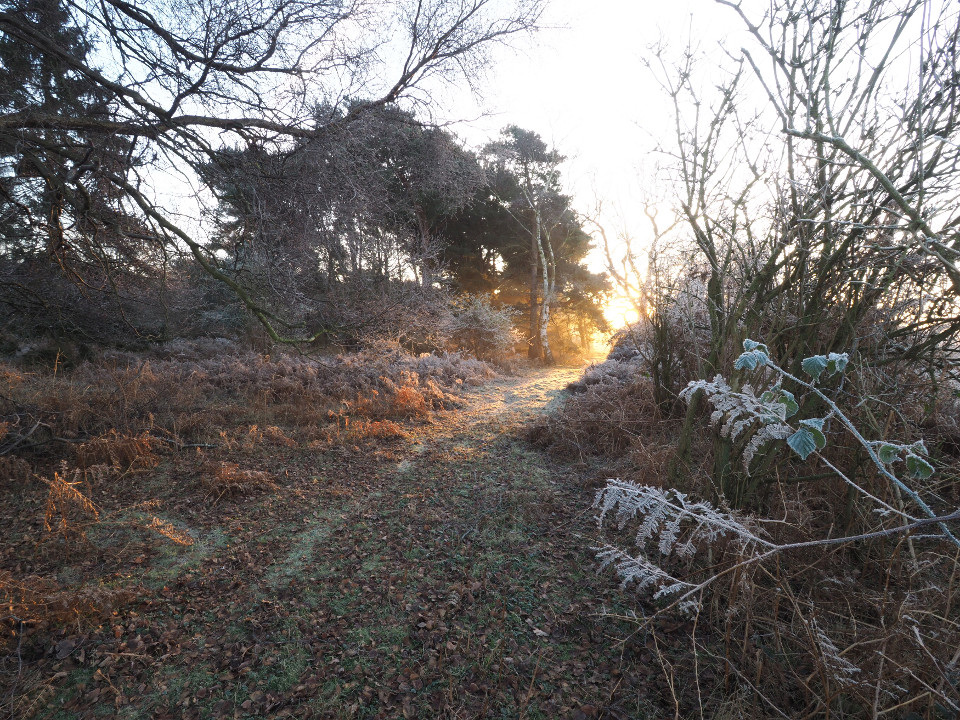 Frozen, foliage, freezing, winter morning, early, sun