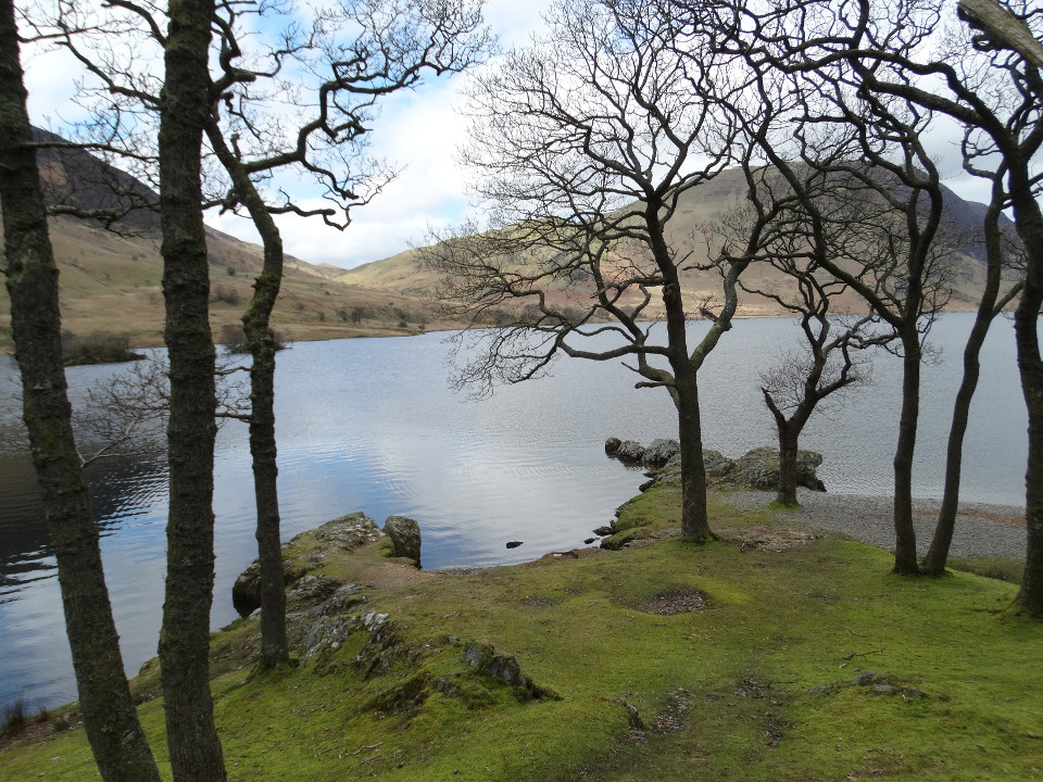 Landscape, lake, coastline, trees, spring