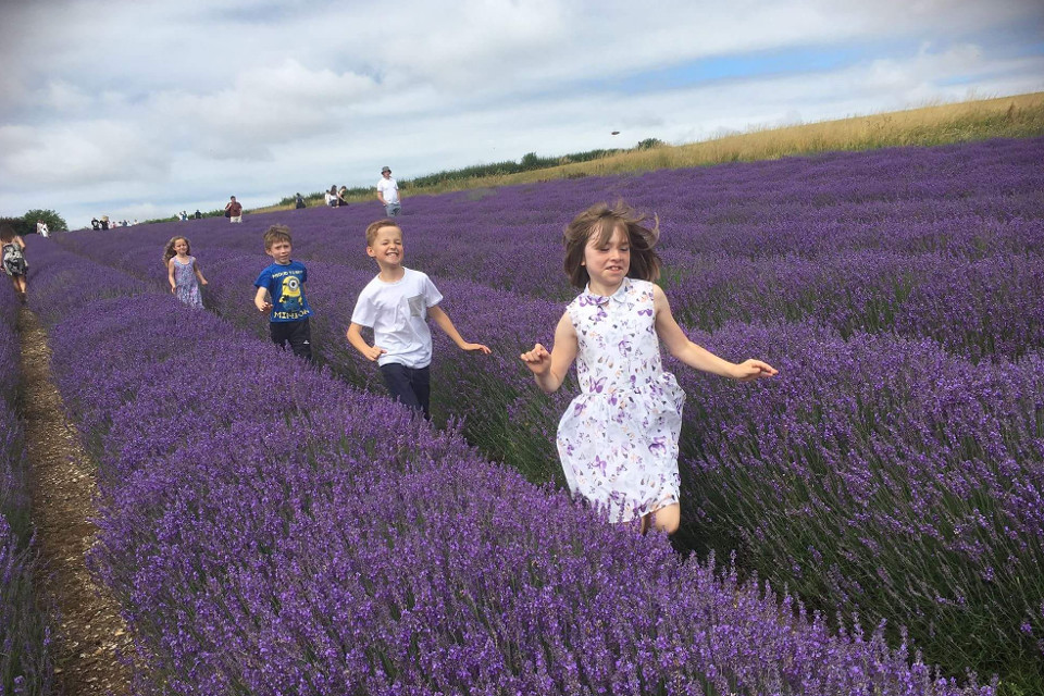 Lavender, fields, kids, running, summer, childhood, purple