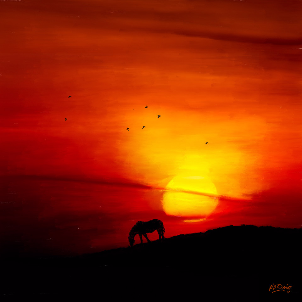 sunset, national park, dartmoor, horse, evening, red sky