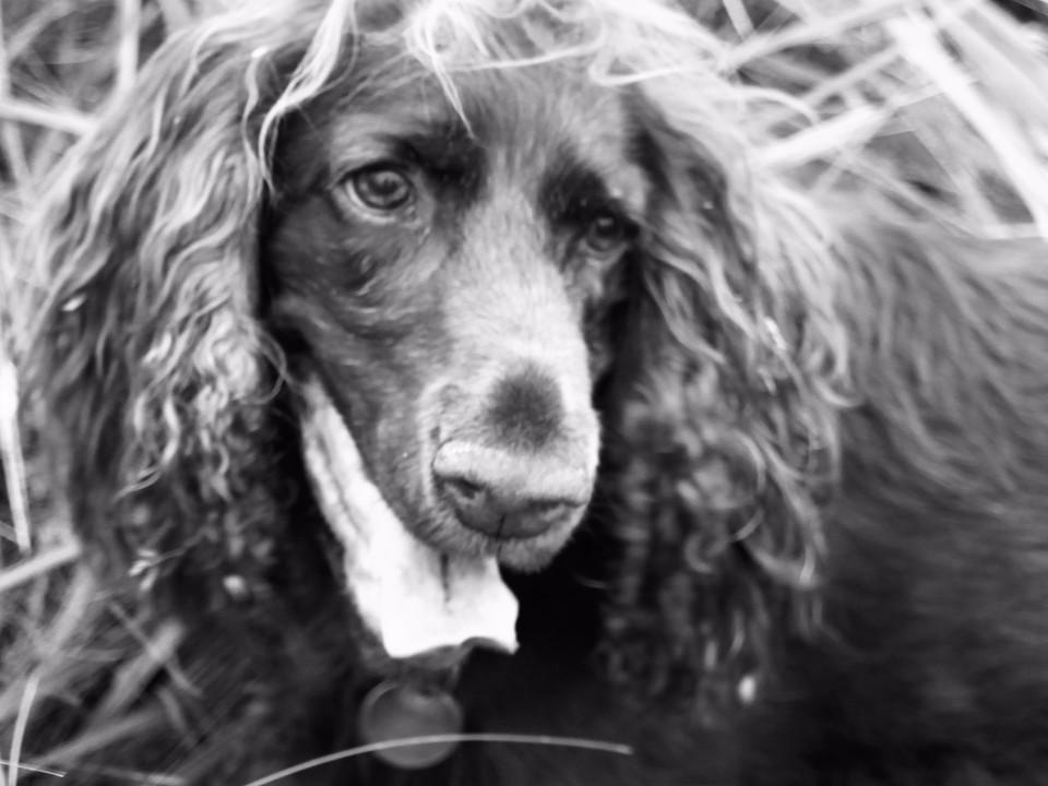 animals, dog, black & white, monochrome, close-up, dramatic