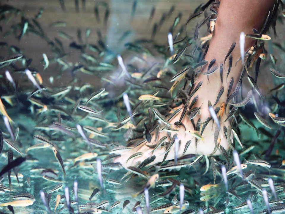 fishes, therapy, Ichthyotherapy, garra rufa, feet, canvas for office