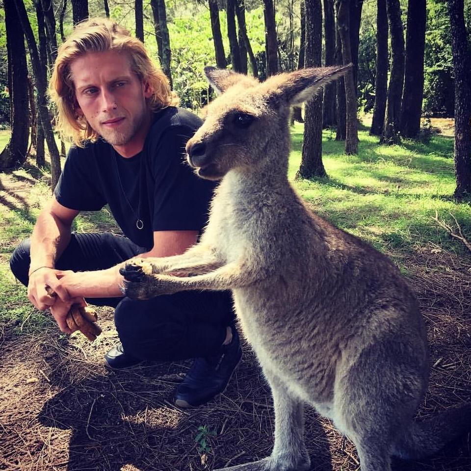 animals, kangaroo, little kangaroo, interaction, Australia