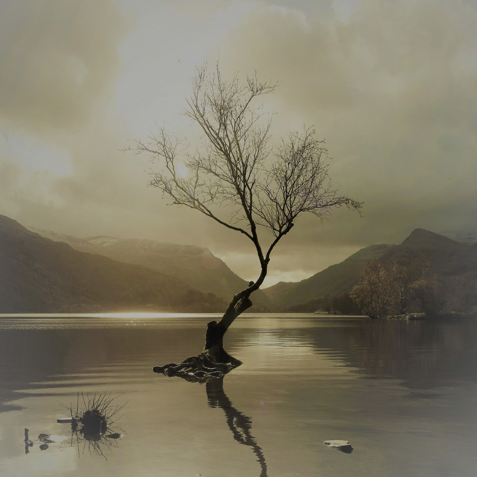 Tree, lake, mountains, sepia, Llyn Padarn, winter, sun