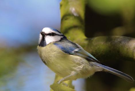 A cute little birdie